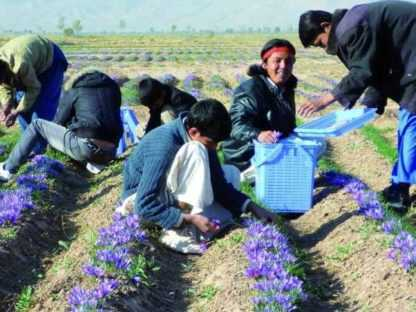 Safran Afghanistan 1g Dose